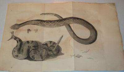"Image for 1799 MEMOIR ON AMPHIBIA. With RATTLESNAKE PLATE.     NO. XLIII.   [From the ""Transactions of the American Philosophical Society, volume IV""]."